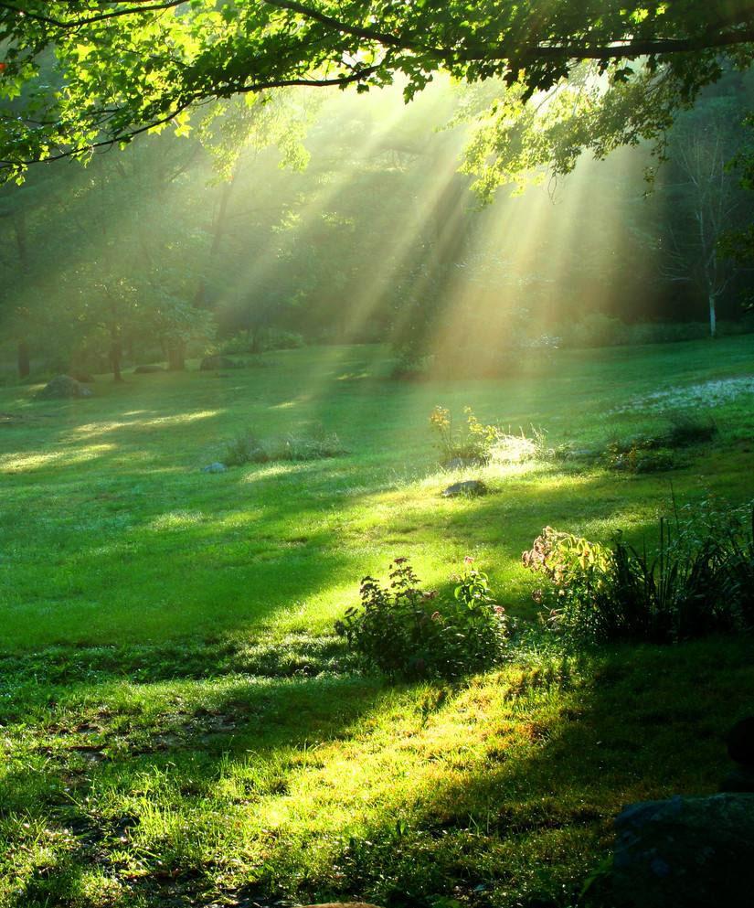 做一抹有梦想的阳光——读《假如我能行走三天》有感