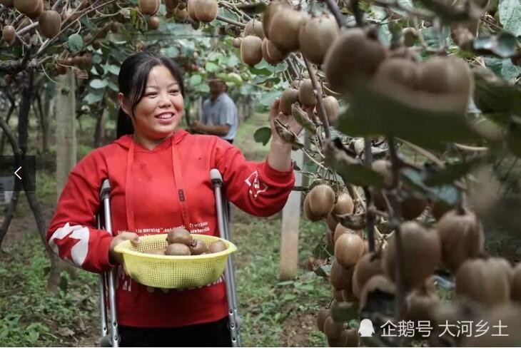 先天残疾女子与命运抗争,利用网络销售猕猴桃,实现脱贫致富