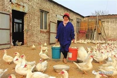 """邯郸""""鸭妈妈""""和她的100多个残障""""儿女"""""""